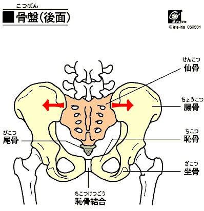 pelvis1